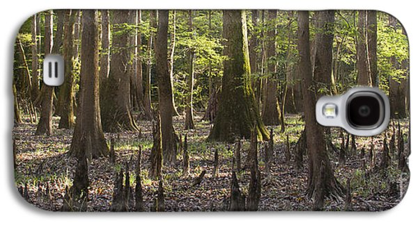 Congaree National Park  Galaxy S4 Case by Dustin K Ryan