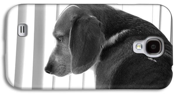 Contemplative Photographs Galaxy S4 Cases - Contemplative Beagle Galaxy S4 Case by Jennifer Lyon