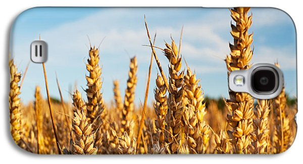 Farmers Field Galaxy S4 Cases - Corn Blowing in the Wind Galaxy S4 Case by Chris Smith