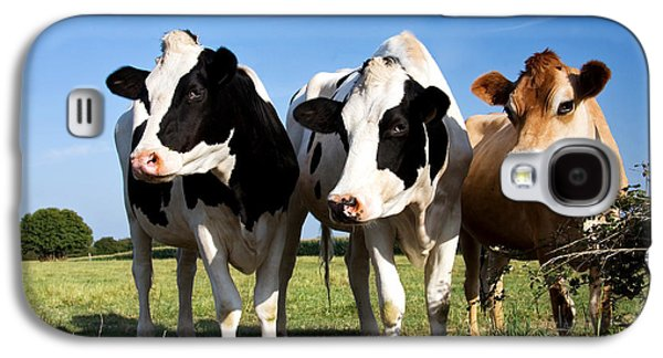 Posed Photographs Galaxy S4 Cases - Cows Galaxy S4 Case by Jane Rix