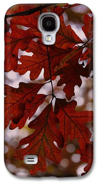 Autumn Foliage Photographs Galaxy S4 Cases - Crimson Oak Galaxy S4 Case by Rick Berk