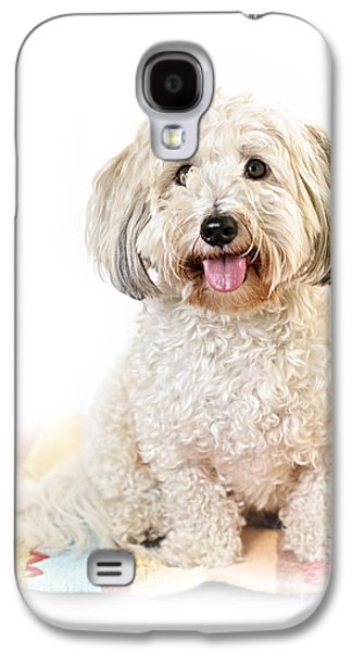 Coton Galaxy S4 Cases - Cute dog portrait Galaxy S4 Case by Elena Elisseeva