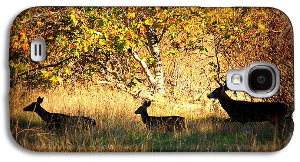 Autumn Landscape Digital Art Galaxy S4 Cases - Deer Family in Sycamore Park Galaxy S4 Case by Carol Groenen