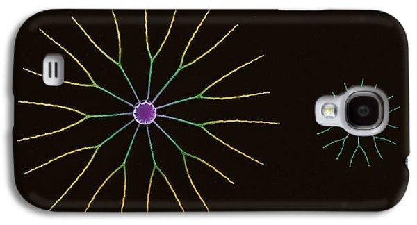 Diatoms Photographs Galaxy S4 Cases - Diatom Algae, Sem Galaxy S4 Case by Steve Gschmeissner