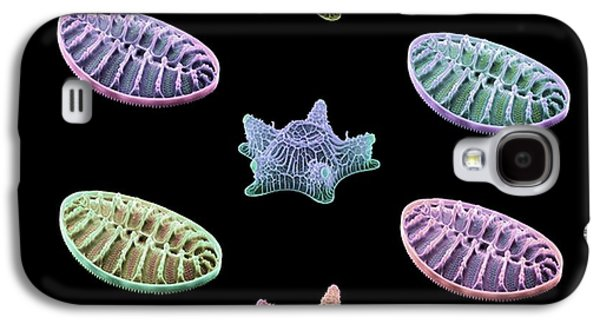 Frustule Galaxy S4 Cases - Diatom Algae, Sems Galaxy S4 Case by Steve Gschmeissner