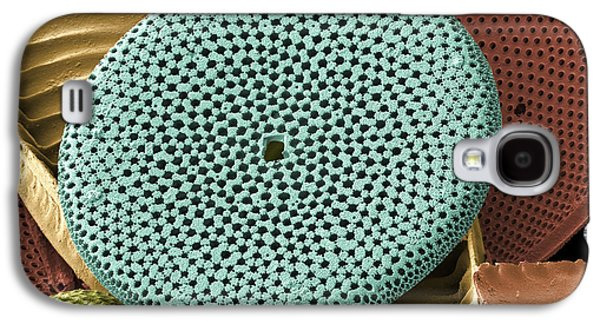 Calcareous Phytoplankton Photographs Galaxy S4 Cases - Diatoms, Sem Galaxy S4 Case by Steve Gschmeissner