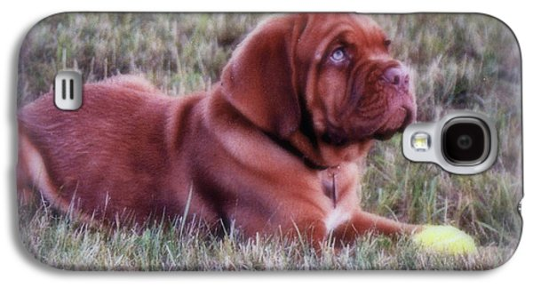 Puppy Digital Art Galaxy S4 Cases - Dogue de Bordeaux Galaxy S4 Case by Kay Novy
