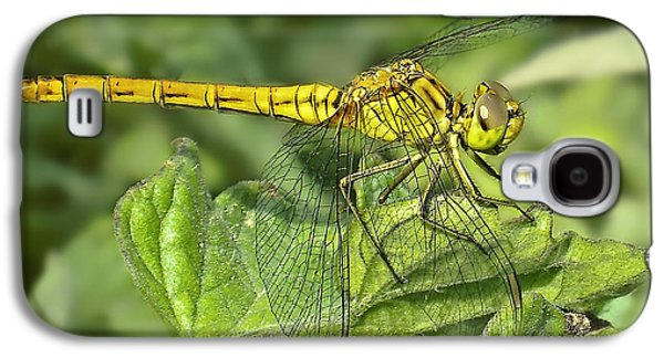 Dragon Photographs Galaxy S4 Cases - DragonFly Galaxy S4 Case by Svetlana Sewell