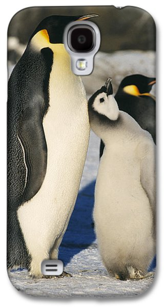Emperor Penguins With Chick Galaxy S4 Case by Doug Allan