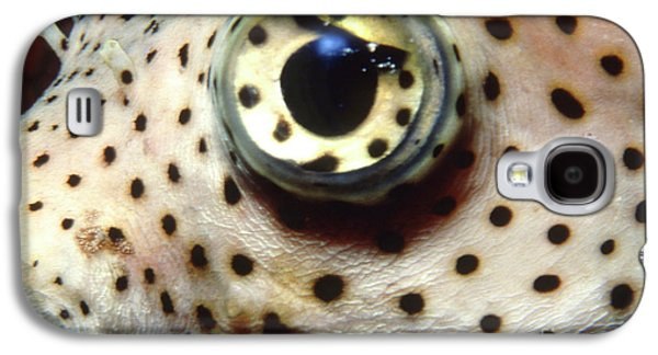 Porcupine Fish Galaxy S4 Cases - Extreme Close-up Of A Pufferfish Eye Galaxy S4 Case by Beverly Factor