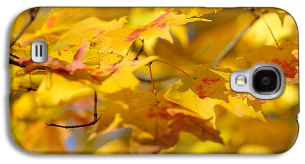 Autumn Leaf Galaxy S4 Cases - Fall Colors Galaxy S4 Case by Sebastian Musial
