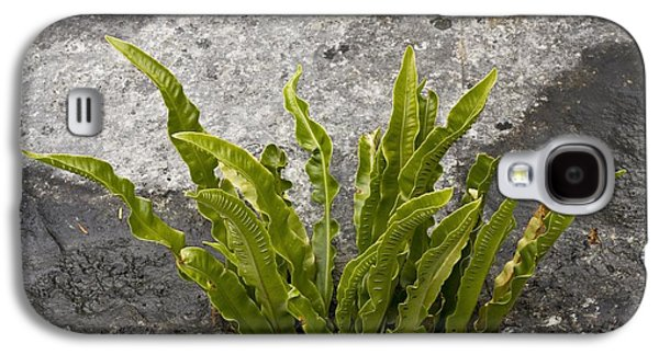 Harts Galaxy S4 Cases - Fern (phyllitis Scolopendrium) Galaxy S4 Case by Bob Gibbons