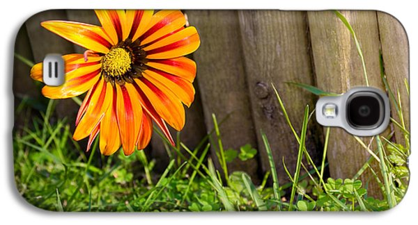Candid Photographs Galaxy S4 Cases - Flower on fence Galaxy S4 Case by Carlos Caetano