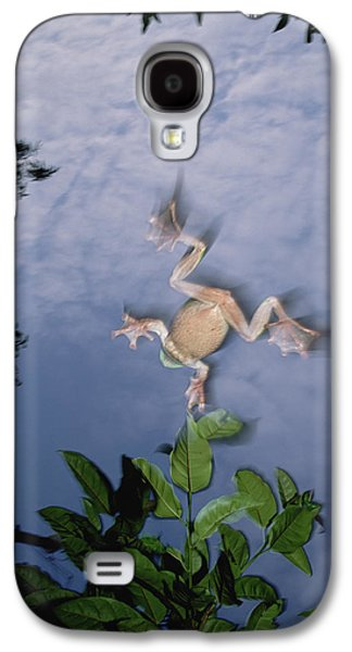 Flying Frog Galaxy S4 Cases - Foam Nest Tree Frog Polypedates Dennysi Galaxy S4 Case by Mark Moffett