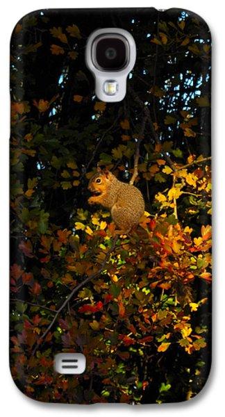 Fox Squirrel Galaxy S4 Cases - Fox Squirrel Galaxy S4 Case by Noah Cole