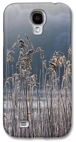 Cold Galaxy S4 Cases - Frozen Reeds At The Shore Of A Lake Galaxy S4 Case by John Short