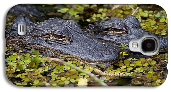 Nature Photographs Galaxy S4 Cases - Gator Babies Galaxy S4 Case by Andres Leon