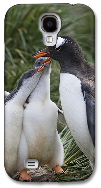Three Chicks Galaxy S4 Cases - Gentoo Penguin Parent And Two Chicks Galaxy S4 Case by Suzi Eszterhas