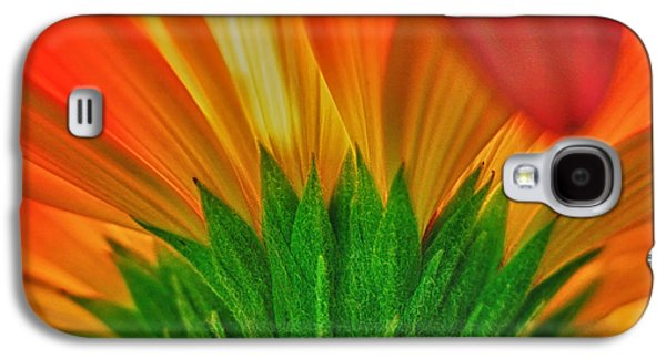 Studio Photographs Galaxy S4 Cases - Gerbera explosion Galaxy S4 Case by Stylianos Kleanthous