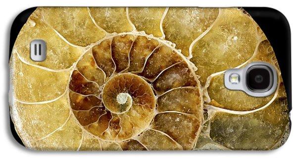 Fibonacci Galaxy S4 Cases - Goniatite Fossil Galaxy S4 Case by Pasieka