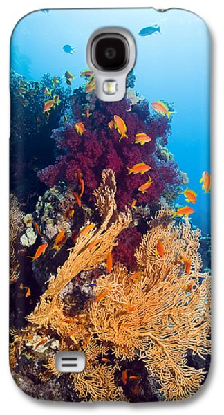 Under Water. Nature Galaxy S4 Cases - Gorgonian And Soft Coral Galaxy S4 Case by Georgette Douwma