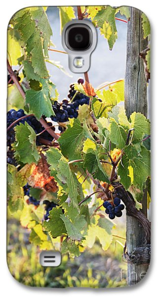 Concord Grapes Galaxy S4 Cases - Grapes on Vine Galaxy S4 Case by Jeremy Woodhouse