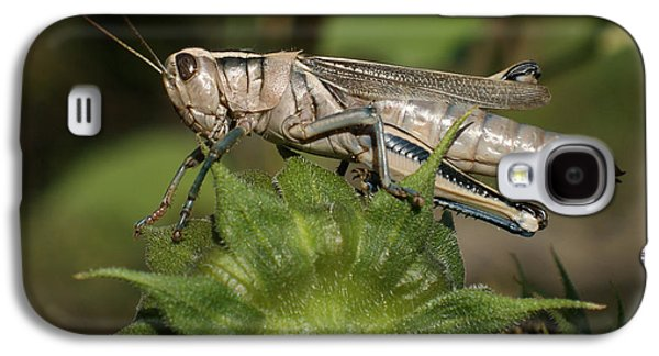 Grasshopper Galaxy S4 Case by Ernie Echols