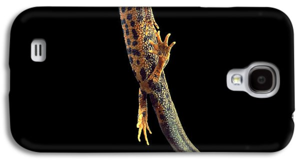 Great Crested Newt Galaxy S4 Case by Andy Harmer