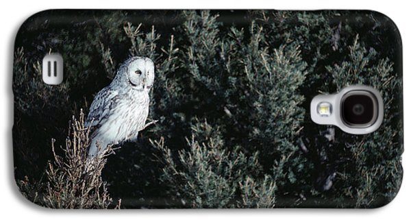 Morph Galaxy S4 Cases - Great Gray Owl Strix Nebulosa In Blonde Galaxy S4 Case by Michael Quinton