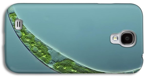 Single Cell Galaxy S4 Cases - Green Alga, Light Micrograph Galaxy S4 Case by Frank Fox