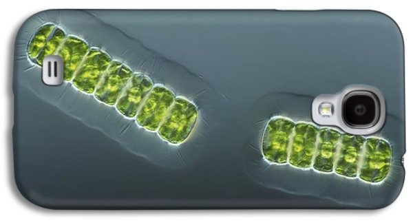 Alga Galaxy S4 Cases - Green Algae, Light Micrograph Galaxy S4 Case by Frank Fox