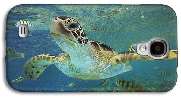 Earth Galaxy S4 Cases - Green Sea Turtle Chelonia Mydas Galaxy S4 Case by Tim Fitzharris