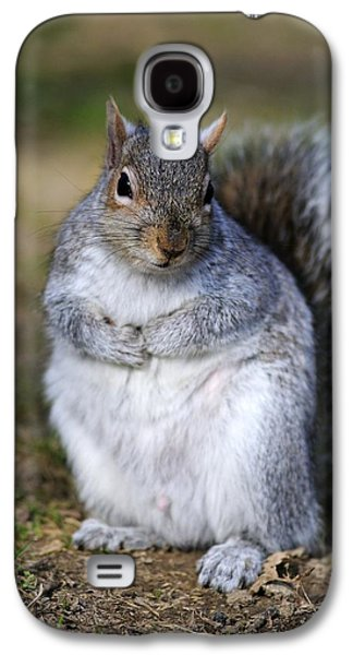 Sciurus Carolinensis Galaxy S4 Cases - Grey Squirrel Sitting On The Ground Galaxy S4 Case by Colin Varndell