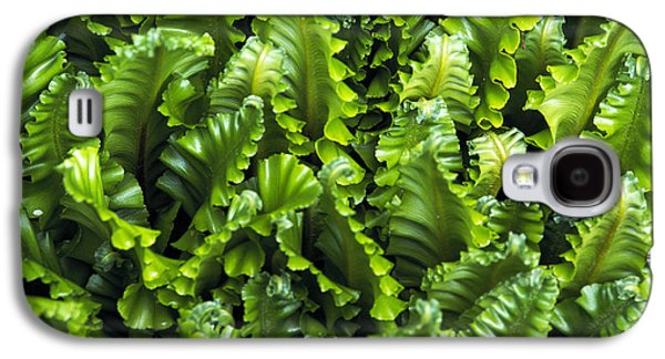 Harts Galaxy S4 Cases - Harts Tongue Fern Galaxy S4 Case by Archie Young
