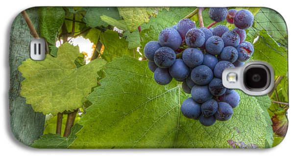 Vintner Galaxy S4 Cases - Harvest Ready Galaxy S4 Case by Jean Noren