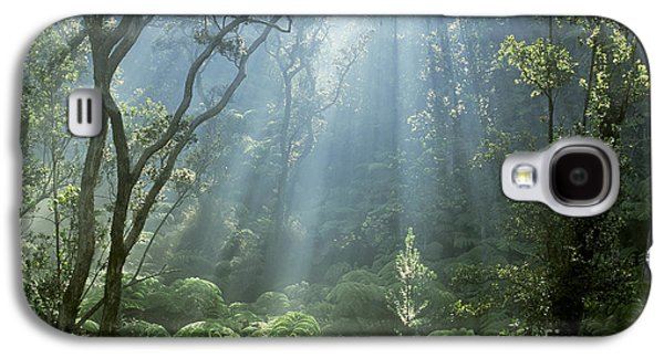 Cibotium Galaxy S4 Cases - Hawaiian Rainforest Galaxy S4 Case by Gregory Dimijian MD