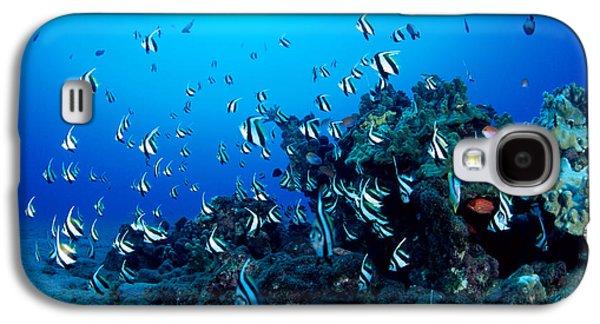 Underwater Photos Galaxy S4 Cases - Hawaiian Reef Scene Galaxy S4 Case by Dave Fleetham - Printscapes