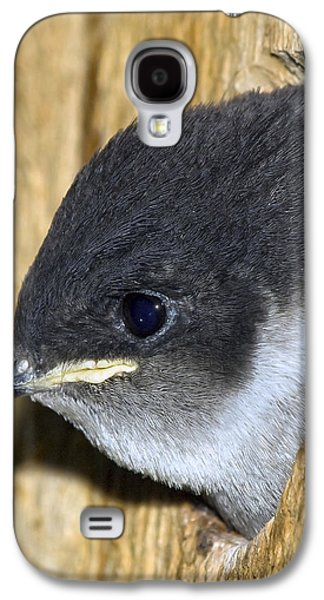 Swallow Chicks Galaxy S4 Cases - Hello Out There Galaxy S4 Case by Derek Holzapfel