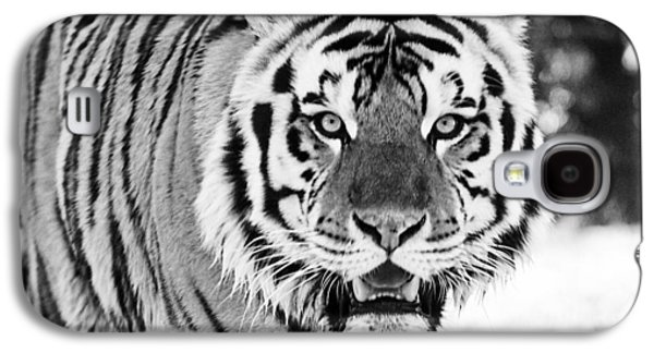 The Tiger Galaxy S4 Cases - His Majesty Galaxy S4 Case by Scott Pellegrin