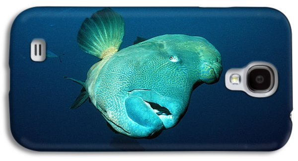 Under Water. Nature Galaxy S4 Cases - Humphead Wrasse Galaxy S4 Case by Georgette Douwma