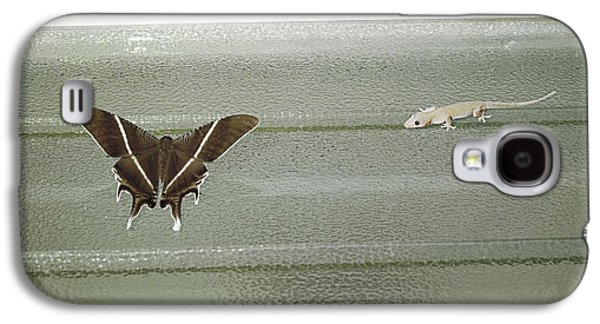 Butterfly Prey Galaxy S4 Cases - Hunting Gecko Galaxy S4 Case by Peter Scoones
