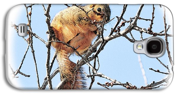 Fox Squirrel Galaxy S4 Cases - In the Tree Top Galaxy S4 Case by Betty LaRue
