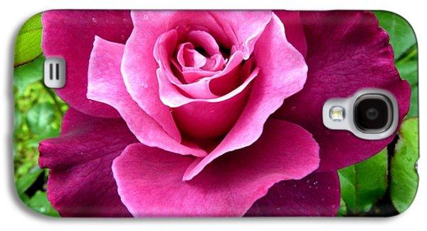 Floribunda Galaxy S4 Cases - Intrigue Rose Galaxy S4 Case by Will Borden
