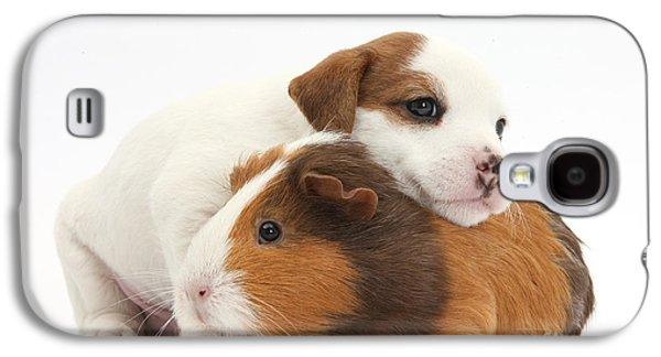 House Pet Galaxy S4 Cases - Jack Russell Terrier Puppy Guinea Pig Galaxy S4 Case by Mark Taylor