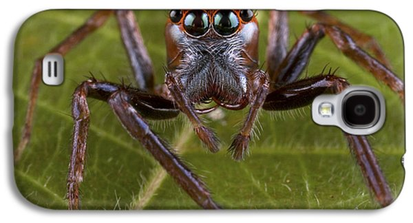 New Britain Galaxy S4 Cases - Jumping Spider Papua New Guinea Galaxy S4 Case by Piotr Naskrecki
