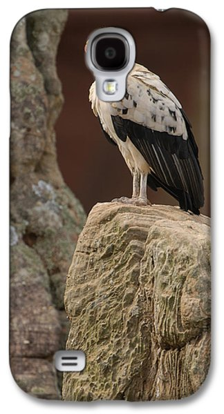 Papa Galaxy S4 Cases - King Vulture Sarcoramphus Papa Perched Galaxy S4 Case by Pete Oxford