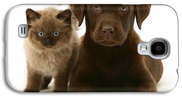 Mixed Labrador Retriever Galaxy S4 Cases - Labrador Pup And Birman-cross Kitten Galaxy S4 Case by Jane Burton
