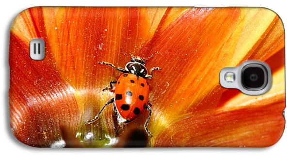 Ladybug Galaxy S4 Cases - Ladybug On Orange Yellow Dahlia . 7D14749 Galaxy S4 Case by Wingsdomain Art and Photography