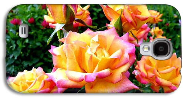 Floribunda Galaxy S4 Cases - Lake Country Roses Galaxy S4 Case by Will Borden