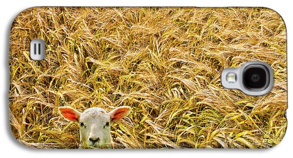 Crops Galaxy S4 Cases - Lamb With Barley Galaxy S4 Case by Meirion Matthias